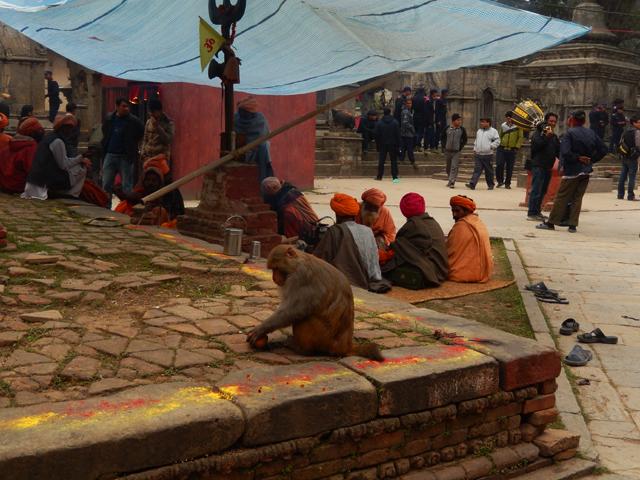 Sâdhus, pèlerins, policiers et macaque entourés de chaitya à Pashupatinath - jeudi 27 février 2014 © S.H